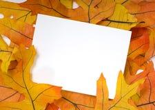 листья приветствию падения карточки предпосылки осени Стоковая Фотография RF