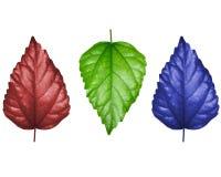 листья принципиальной схемы Стоковые Изображения