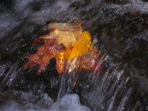 листья пущи падения ручейка цветастые стоковое фото