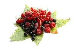 листья пущи ягод Стоковые Фотографии RF