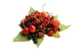 листья пущи ягод Стоковые Изображения RF