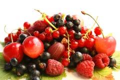 листья пущи ягод Стоковые Изображения