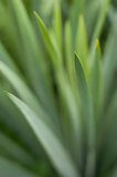 Листья радужек Стоковое Изображение RF