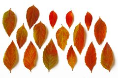 Листья различной осени яркие аранжированные в строке Стоковые Изображения RF