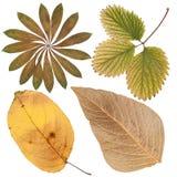 Листья различных цветков и деревьев Стоковая Фотография
