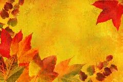 листья рамки ввели сбор винограда в моду Стоковые Изображения