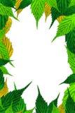 листья рамки граници свежие Стоковое Изображение RF