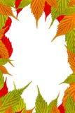 листья рамки граници свежие Стоковые Фотографии RF