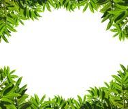 листья рамки зеленые естественные Стоковое Изображение RF