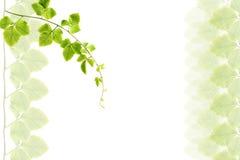 листья рамки зеленые Стоковое фото RF