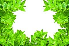 листья рамки зеленые Стоковая Фотография RF