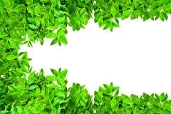 листья рамки зеленые Стоковое Изображение