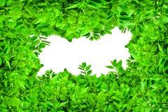 листья рамки зеленые Стоковые Фотографии RF