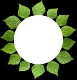 листья рамки круга Стоковые Изображения
