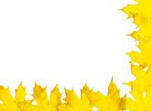 листья рамки осени Стоковая Фотография RF