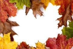 листья рамки осени Стоковые Фотографии RF
