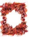 листья рамки осени Стоковые Изображения RF