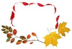 листья рамки падения осени Стоковые Изображения RF