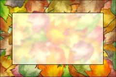 листья рамки падения Стоковое фото RF