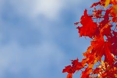 Листья рамки- против неба Стоковые Изображения
