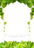листья рамки свежие естественные Стоковая Фотография RF
