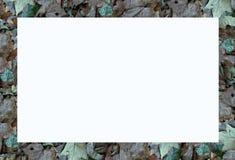 листья рамки Стоковая Фотография