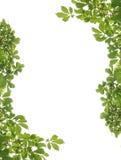 листья рамки Стоковые Изображения