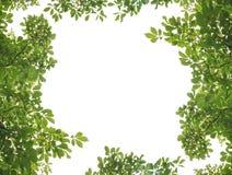 листья рамки стоковые фото