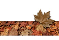 листья рамки Стоковое Изображение RF