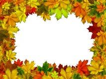 листья рамки Стоковые Изображения RF