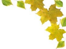 листья рамки Стоковые Фотографии RF