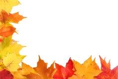 листья рамки autum Стоковая Фотография