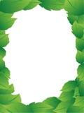 листья рамок бесплатная иллюстрация