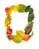 листья рамок Стоковое Фото