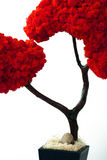 листья расшивы выходят старому плантатору красная древесина вала Стоковая Фотография