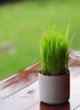 Листья риса в чашке Стоковая Фотография