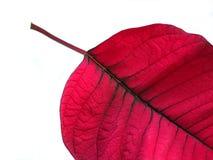 листья рождества стоковые фото