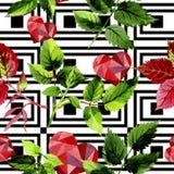 Листья розовой картины в стиле акварели Стоковые Фото