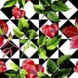 Листья розовой картины в стиле акварели Стоковое Фото