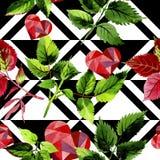 Листья розовой картины в стиле акварели Стоковое Изображение RF