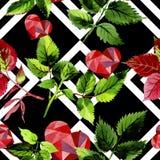 Листья розовой картины в стиле акварели Стоковая Фотография RF