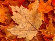 листья росы Стоковое фото RF