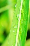 листья росы стоковое изображение rf