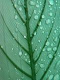 листья росы Стоковые Фотографии RF