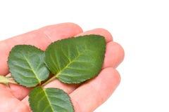 листья руки Стоковое Фото