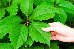 листья руки стоковые изображения rf