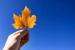 листья руки Стоковая Фотография