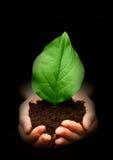 листья рук Стоковое Изображение