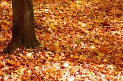 листья сада пущи падения золотистые Стоковые Изображения