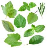 листья сада собрания Стоковые Фото